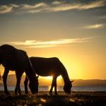 song kol lake horses in sunset