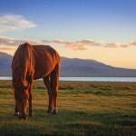 song kol lake horse